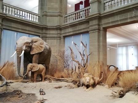 Eisbären im Museum König